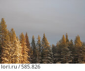Зимний лес, освещенный солнцем, место для текста сверху. Стоковое фото, фотограф Anna Marklund / Фотобанк Лори
