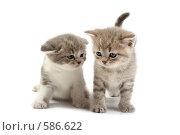 Купить «Два котенка на белом фоне», фото № 586622, снято 9 ноября 2008 г. (c) Cветлана Гладкова / Фотобанк Лори