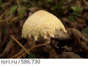 Купить «Шерстяной гриб», фото № 586730, снято 21 сентября 2008 г. (c) Владимир Соловьев / Фотобанк Лори