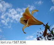 Лилия. Стоковое фото, фотограф Виктор Бондарь / Фотобанк Лори