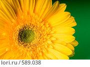 Купить «Желтая гербера на зеленом фоне», фото № 589038, снято 28 января 2006 г. (c) Юлия Сайганова / Фотобанк Лори