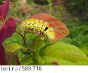 Лохматая гусеница на листке. Стоковое фото, фотограф Владимир Соловьев / Фотобанк Лори