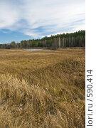 Купить «Осенний пейзаж», фото № 590414, снято 31 октября 2008 г. (c) Юрий Бельмесов / Фотобанк Лори