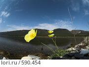 Купить «Байкал. Сентябрь. Цветущий мак.», фото № 590454, снято 12 сентября 2008 г. (c) Andrey M / Фотобанк Лори