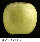 Купить «Зеленое яблоко», фото № 590810, снято 29 ноября 2008 г. (c) Vadim Tatarnitsev / Фотобанк Лори
