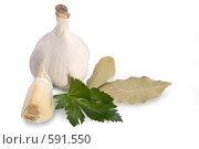 Купить «Чеснок, сельдерей и лавровый лист», фото № 591550, снято 29 ноября 2008 г. (c) Андрей Рыбачук / Фотобанк Лори