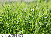 Купить «Трава», фото № 592078, снято 9 августа 2008 г. (c) Бутенко Андрей / Фотобанк Лори