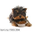 Купить «Щенок», фото № 593394, снято 30 ноября 2008 г. (c) Тимофеев Павел / Фотобанк Лори