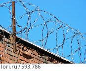 Купить «Колючая проволока», эксклюзивное фото № 593786, снято 6 июня 2008 г. (c) lana1501 / Фотобанк Лори