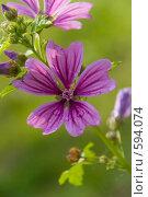 Купить «Цветок фиолетовый», фото № 594074, снято 16 августа 2008 г. (c) Абрамов Антон / Фотобанк Лори