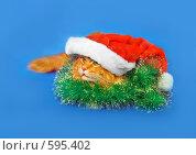 Купить «Новогодний рыжий котик в зеленой мишуре и дед-морозовской шапке», фото № 595402, снято 23 ноября 2008 г. (c) Fro / Фотобанк Лори