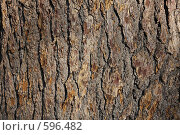 Купить «Кора дуба», фото № 596482, снято 13 ноября 2008 г. (c) Pshenichka / Фотобанк Лори