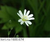 Купить «Белый цветок весной», фото № 600674, снято 19 мая 2005 г. (c) Сергей Бехтерев / Фотобанк Лори