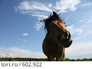 Купить «Лошадь и небесный пейзаж», эксклюзивное фото № 602922, снято 3 июля 2008 г. (c) Яна Королёва / Фотобанк Лори