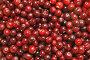 Фон из ягод клюквы, фото № 604950, снято 9 ноября 2008 г. (c) Игорь Соколов / Фотобанк Лори