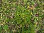 Природа Южных Курил: бамбук и ель, фото № 612814, снято 13 сентября 2007 г. (c) Сергей Рогальский / Фотобанк Лори