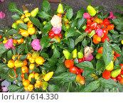 Экзотическое растение, остров Капри, Италия. Стоковое фото, фотограф EVA / Фотобанк Лори