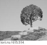 Одинокое дерево. Стоковое фото, фотограф A Большаков / Фотобанк Лори