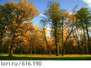 Купить «Осенний деревья в парке», фото № 616190, снято 8 октября 2008 г. (c) Володина Светлана / Фотобанк Лори