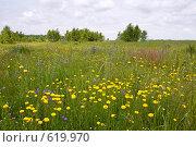 Купить «Полевые цветы», фото № 619970, снято 14 июня 2008 г. (c) Юрий Брыкайло / Фотобанк Лори