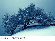Купить «Лунное сияние», фото № 620702, снято 25 марта 2008 г. (c) Леонид Селивёрстов / Фотобанк Лори