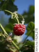 Спелая ягода малина. Стоковое фото, фотограф Сергей Негробов / Фотобанк Лори