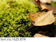 Купить «Лист в осеннем лесу», фото № 625874, снято 5 октября 2008 г. (c) Сергей Пестерев / Фотобанк Лори
