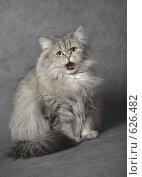 Купить «Кошка зевает», фото № 626482, снято 14 декабря 2008 г. (c) Михаил Ястребов / Фотобанк Лори