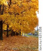 Золото городских аллей осенью. Стоковое фото, фотограф Natalie Molchanova / Фотобанк Лори