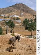 Купить «Осел на каменистом пустыне в поселке Матмата,  в Тунисе», фото № 632454, снято 21 мая 2008 г. (c) Aleksander Kaasik / Фотобанк Лори