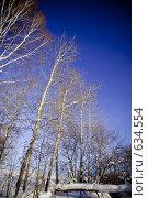 Купить «Деревья», фото № 634554, снято 28 декабря 2008 г. (c) Андрей Доронченко / Фотобанк Лори