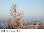 Купить «Старая липа в инее», фото № 635458, снято 27 декабря 2008 г. (c) Петров Алексей / Фотобанк Лори