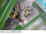 Взгляд. Стоковое фото, фотограф Юрий Бульший / Фотобанк Лори
