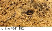 Купить «Муравьи около муравейника», фото № 641182, снято 25 мая 2007 г. (c) Маргарита Лир / Фотобанк Лори