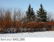 Купить «Зимний пейзаж», фото № 643286, снято 2 января 2009 г. (c) Татьяна Лепилова / Фотобанк Лори