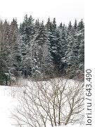Купить «Зимний пейзаж», фото № 643490, снято 2 января 2009 г. (c) Медведева Мила / Фотобанк Лори