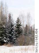 Купить «Зимний пейзаж с елями», фото № 643494, снято 2 января 2009 г. (c) Медведева Мила / Фотобанк Лори