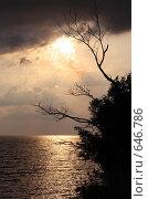 Купить «Силуэт засохшего дерева на берегу моря», фото № 646786, снято 30 августа 2008 г. (c) Владимир Сергеев / Фотобанк Лори
