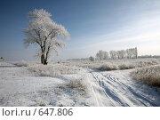 Купить «Зимняя дорога и  деревья, покрытые инеем», фото № 647806, снято 4 января 2009 г. (c) Виктор Филиппович Погонцев / Фотобанк Лори
