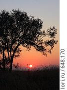 Купить «Дерево на фоне заката», фото № 648170, снято 10 октября 2008 г. (c) Дмитрий Натарин / Фотобанк Лори
