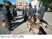 Купить «Служебные  милицейские  собаки», фото № 651242, снято 4 июля 2008 г. (c) Николай Гернет / Фотобанк Лори