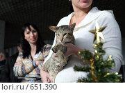 Купить «На выставке кошек», фото № 651390, снято 20 декабря 2008 г. (c) Виктор Филиппович Погонцев / Фотобанк Лори