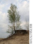 Купить «Одинокая береза», фото № 652938, снято 3 июня 2006 г. (c) Александр Ерёмин / Фотобанк Лори