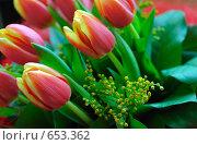 Тюльпаны. Стоковое фото, фотограф Тимофеев Павел / Фотобанк Лори
