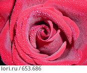 Купить «Капли воды на алой розе (макросъёмка)», фото № 653686, снято 6 июля 2020 г. (c) Галина Гуреева / Фотобанк Лори