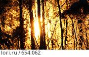 Купить «Зима, Лесная красота», фото № 654062, снято 5 января 2009 г. (c) Сергей Владимирович / Фотобанк Лори