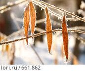 Желтые листья в снегу. Стоковое фото, фотограф Володина Светлана / Фотобанк Лори