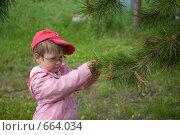 Купить «Девочка рассматривает лиственничные шишки», фото № 664034, снято 17 июня 2008 г. (c) Tamara Sushko / Фотобанк Лори