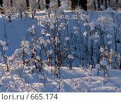 Купить «Снег», фото № 665174, снято 24 января 2008 г. (c) Константин Порядин / Фотобанк Лори