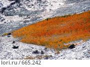 Купить «Лес на склоне заснеженных гор, Америка», фото № 665242, снято 11 октября 2008 г. (c) Estet / Фотобанк Лори